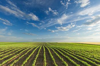 Studium Agrarwissenschaft
