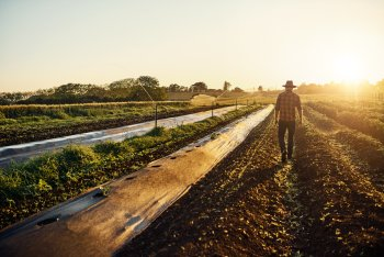 Agrarwissenschaft Studieren